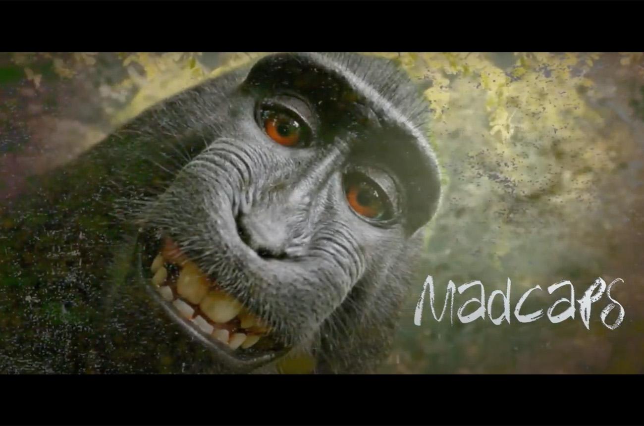 Monkey Business Promo | Discovery India